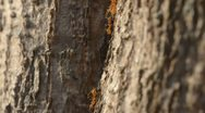 Ants and tree Stock Footage