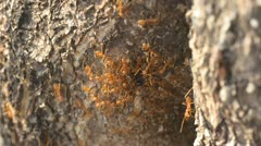ants and tree - stock footage