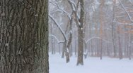 Stock Video Footage of The winter forest. snow-fall. picturesque landscape