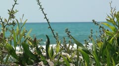 Natural vegetation on the beach close up Stock Footage