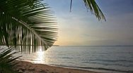 Stock Video Footage of Palm leaf and sunset