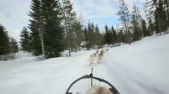 Sled dog - stock footage