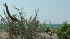 Vegetation on natural beach Stock Footage