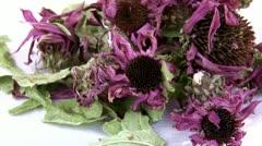 Echinacea dried flowers, tea Stock Footage