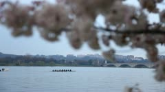 Cherry Blossom Festival DC Focus Stock Footage