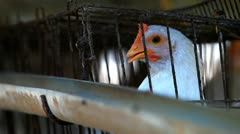 Caged Hen. Stock Footage