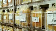 Storage of frozen blood (-40c) Stock Footage