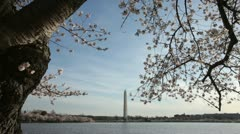 Washington Monument Cherry Blossom DC Tilt Stock Footage