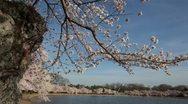 Cherry Blossom Festival DC Tidal Basin Tilt Stock Footage