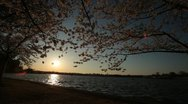 Cherry Blossom Festival DC Sunset Over Water Stock Footage