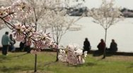Cherry Blossom Festival DC Sitting by Water Focus Stock Footage
