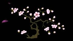 Spring, flower, tree sakura with alpha Stock Footage