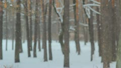 The winter forest. snow-fall. picturesque landscape Stock Footage