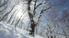 Winter scenes panning Stock Footage