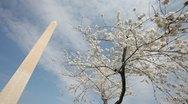 Washington Monument Cherry Blossom DC Dutch Angle Stock Footage