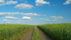 Dirt road through the green agricultural field, timelapse Stock Footage