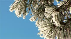 frosty branch - stock footage