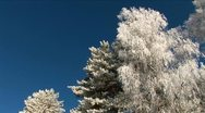 Frosty trees Stock Footage