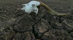 Zombie Skull Landscape Stock Footage