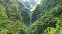 Rainforest Madeira 20110426 133015 Stock Footage