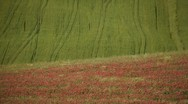 Cultivated fields Stock Footage