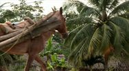 Villager hauling logs with horse in belize Stock Footage