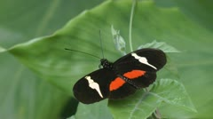Butterfly, Butterflies, Insects Stock Footage