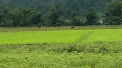Mung beans and rice field on Panay island Philippines Stock Footage
