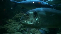 Big fishes in a water tank 2 Stock Footage