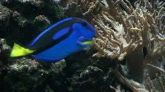 Tropical fish in a tank 3 Stock Footage