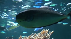 Tropical fish in a tank 1 Stock Footage