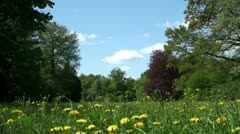 Summer landscape of Europe. Meadow with dandelions Stock Footage