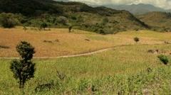 Wind in Corn in Honduras - stock footage