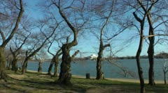 Pre-Blossoms, old Cherry Trees before Blossoms Stock Footage