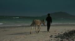 Guy and donkey on the beach Stock Footage