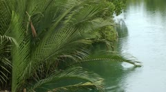 Nipa palms growing on the side of a river in the Philippines Stock Footage