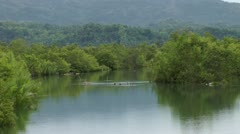 River with nipa and mangrove growing on the edges - Philippines Stock Footage