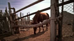 Horse behind fence 2 Stock Footage