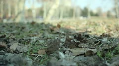 Park (autumn leaves) _1 Stock Footage