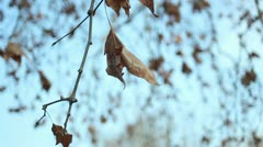 Close up of tree branch moving in the wind Stock Footage