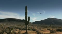 Cactus in Desert 2 Stock Footage
