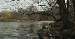 Winter lake shore in Central Park NY 4K Stock Footage