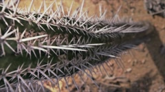 Cactus from above Stock Footage
