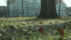 Park (autumn leaves) _2 Stock Footage