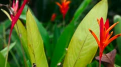 Tropical flower. Stock Footage