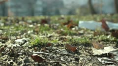 Park (autumn leaves) _4 Stock Footage