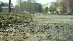 Park (autumn leaves) _5 Stock Footage