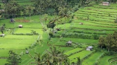 Field terraces close to mount agung, bali Stock Footage