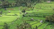 Stock Video Footage of field terraces close to mount agung, bali