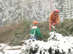 Woodcutters work cut tree Stock Footage